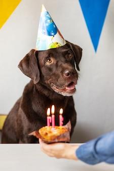 O aniversário dos cães o feriado é o aniversário de velas de um animal de estimação e um bolo para um labrador retriever