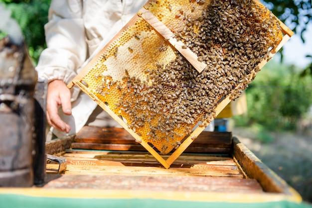 O apicultor abre a colmeia, as abelhas verifica, verifica o mel. apicultor explorando o favo de mel.