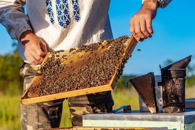 O apicultor examina abelhas em favos de mel
