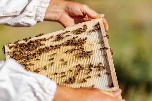 O apicultor examina as abelhas em favos de mel. mãos do apicultor. a abelha está em close.