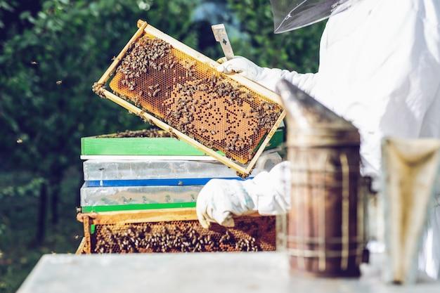 O apicultor tem uma célula de mel com abelhas nas mãos.