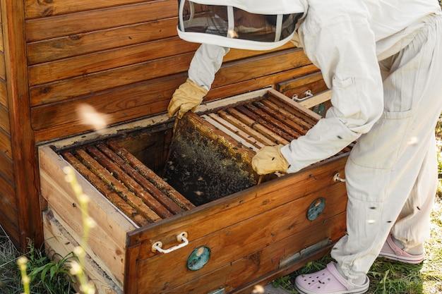 O apicultor tira da colméia uma moldura de madeira com favo de mel.