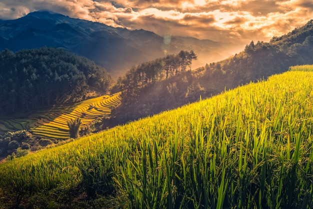 O arroz coloca em terraced com o pavilhão de madeira no nascer do sol em mu cang chai, yenbai, vietname.