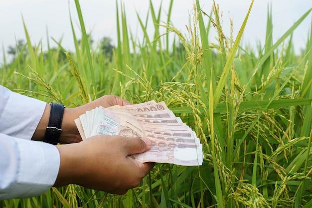 O arroz do conceito a rico com mão do homem de negócios dá o dinheiro. foco seletivo.