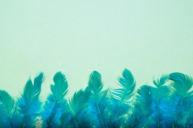 O azul brilhante empluma-se o close-up em uma luz - fundo verde.