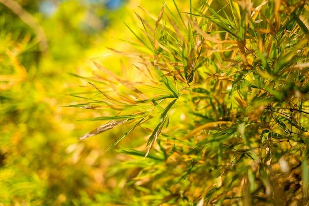 O bambu deixa o fundo e a luz do sol.