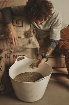 O barista tatuado verifica os grãos de café verdes crus em uma cesta de plástico branco, sentado em sacos de algodão no armazém.