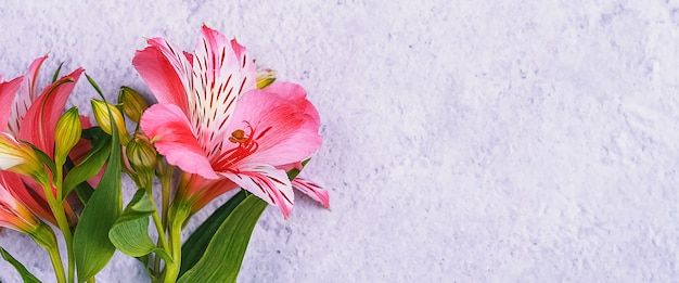 O buquê de orquídeas é lindo, fresco, vermelho brilhante sobre um fundo claro.