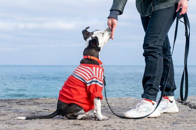 O cachorrinho segue os comandos. obediência do cão no mar.
