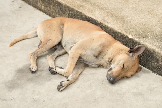 O cachorro da rua está dormindo.