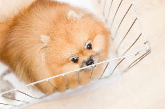 O cachorro de um cão de rua atrás das grades de um abrigo para cães