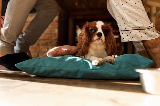 O cachorro deita em um travesseiro debaixo da mesa entre os donos
