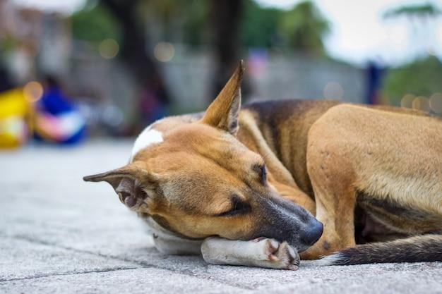 O cachorro deitou no chão.