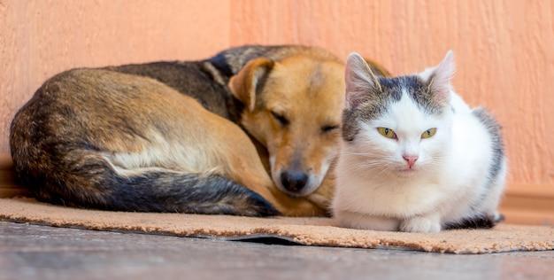O cachorro e o gato estão deitados no tapete juntos
