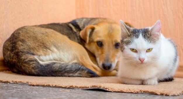 O cachorro e o gato estão juntos no tapete. cachorro e gato são amigos