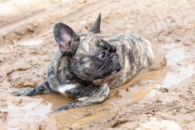 O cachorro está deitado na lama.