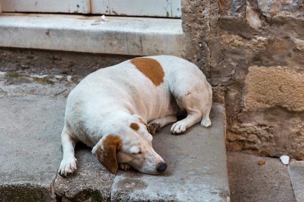 O cachorro está dormindo, deitado na rua no concreto, cachorro do quintal.