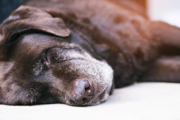 O cachorro esta dormindo em casa