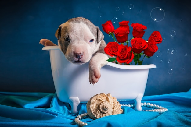 O cachorro está no banheiro com um buquê de rosas. parabéns pelo dia internacional da mulher.