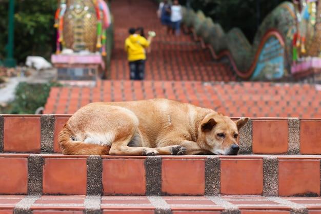 O cachorro marrom estava deitado na escada