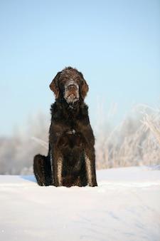 O cachorro marrom senta-se na neve contra o céu