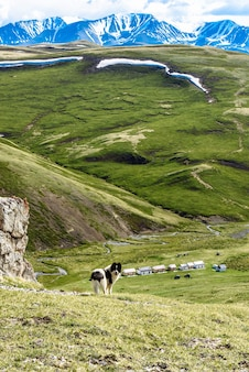 O cachorro passeia nas montanhas com uma bela vista