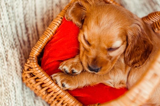 O cachorro pequeno dormindo no cubículo
