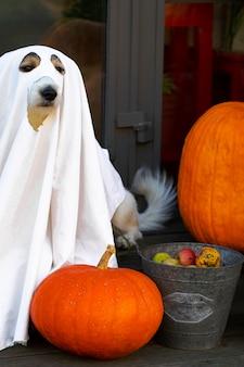 O cachorro se senta como um fantasma nos degraus com abóboras jack, assustador e assustador. fantasma de halloween, fotografia vertical