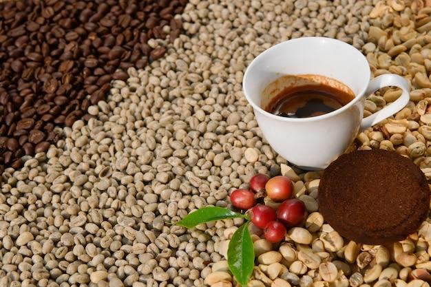 O café expresso em uma xícara branca no fundo é um grão de café arábica.