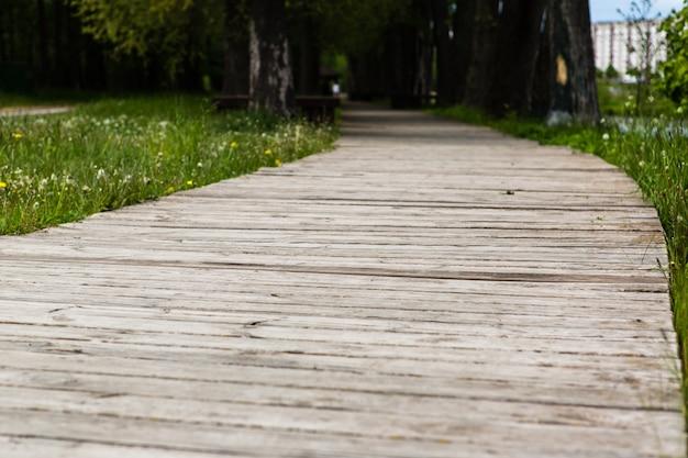 O calçadão de madeira cria um caminho pelo campo de grama verde que leva à floresta.
