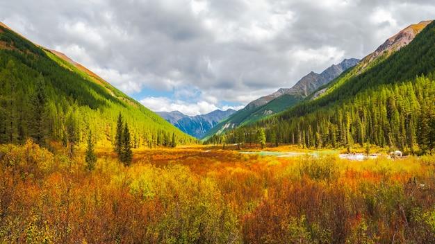 O caminho através do anão de vidoeiro (betula nana) no outono. cenário brilhante de montanhas e florestas de outono da região de altai, sibéria.