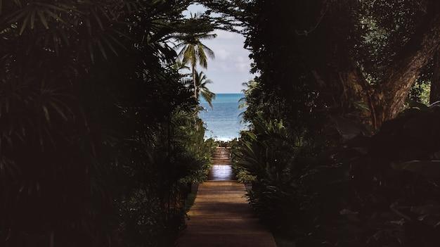 O caminho de cascalho pela floresta leva ao mar.