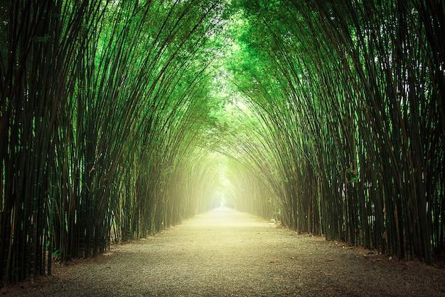 O caminho ladeado por dois lados sem floresta de bambu.