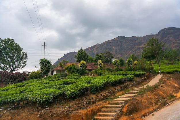 O caminho para a plantação de chá em munnar kerala, no sul da índia. chá verde de alta montanha em montanhas de plano predam ao fundo. como cultivar chá no ceilão