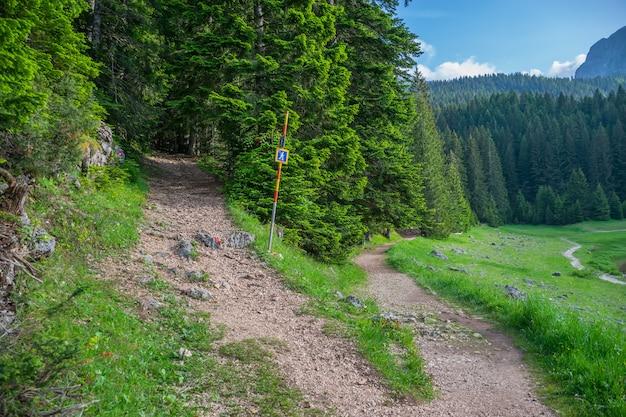 O caminho para caminhadas na floresta de coníferas.