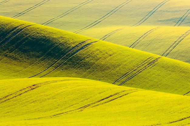 O campo amarelo da violação acena montes em moravia sul, república checa.