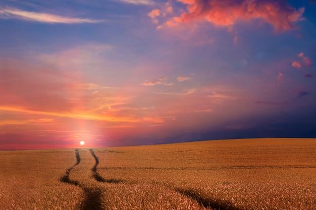 O campo ao pôr do sol