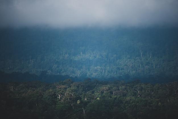 O campo da floresta tropical, cena da paisagem natural