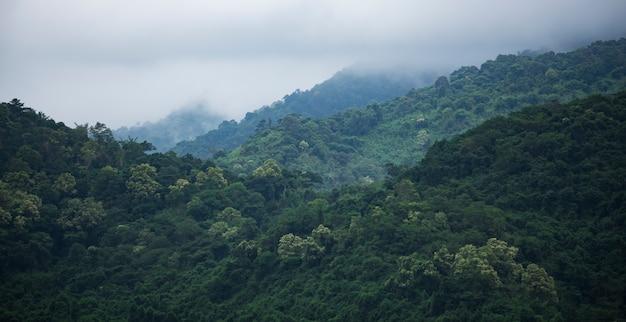O campo da floresta verde tropical, parque nacional da tailândia