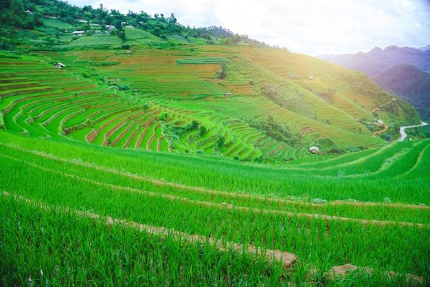 O campo de almofada e a montanha terraced bonitos da arroz ajardinam em mu cang chai e em sapa vietnam.