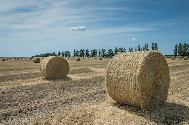 O campo de trigo inclinado com palheiros