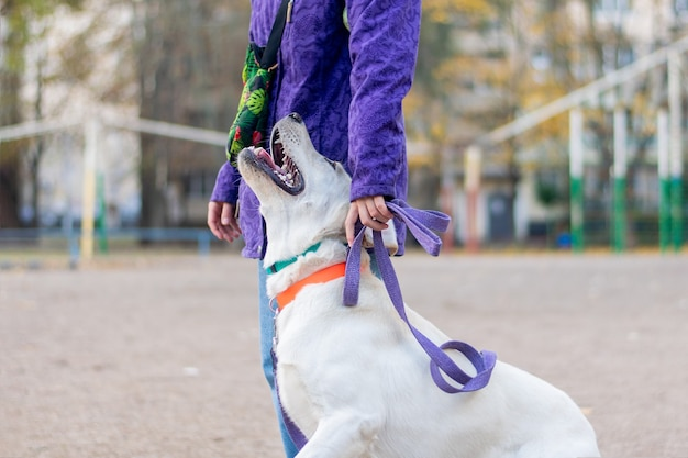 O cão aprende a obedecer ao comando próximo a ele.