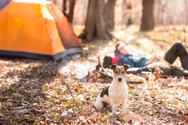 O cão bonito novo está descansando nas madeiras perto da fogueira.