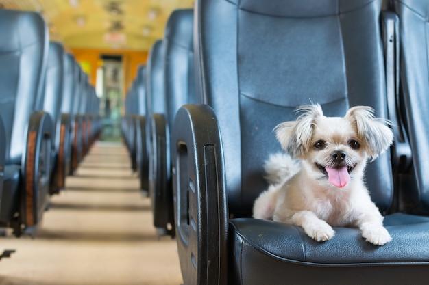 O cão bonito viajar de comboio ferroviário vintage