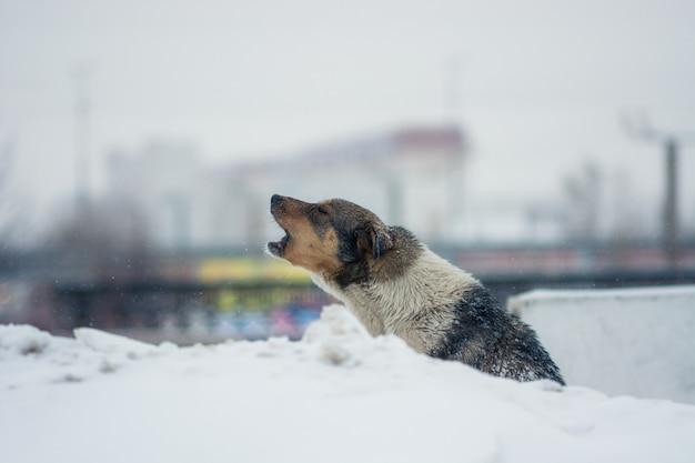 O cão de jarda senta-se na neve no inverno.