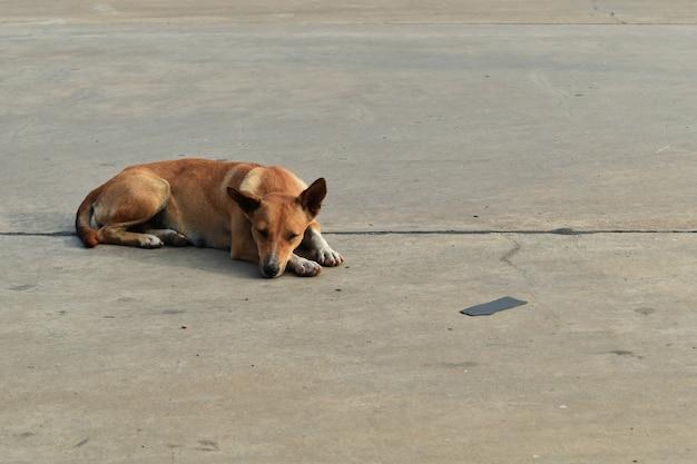 O cão desabrigado sozinho estabelece no estacionamento na cidade
