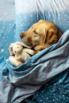 O cão dorme confortavelmente com um brinquedo debaixo das cobertas.