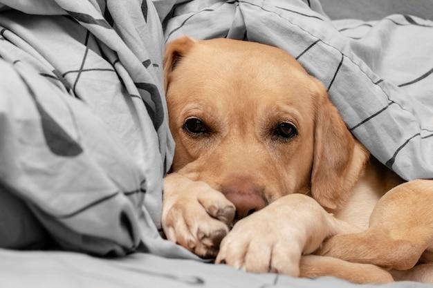 O cão fofo dorme confortavelmente na cama.