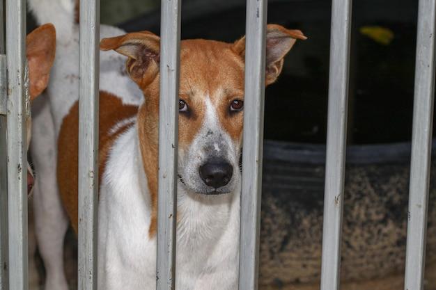 O cão na gaiola de lado em casa