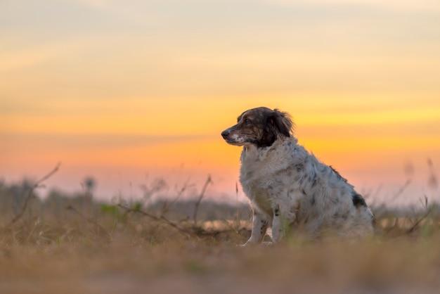 O cão sentado no prado no fundo bonito por do sol.